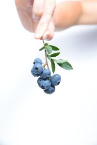 blueberry-539134_1280