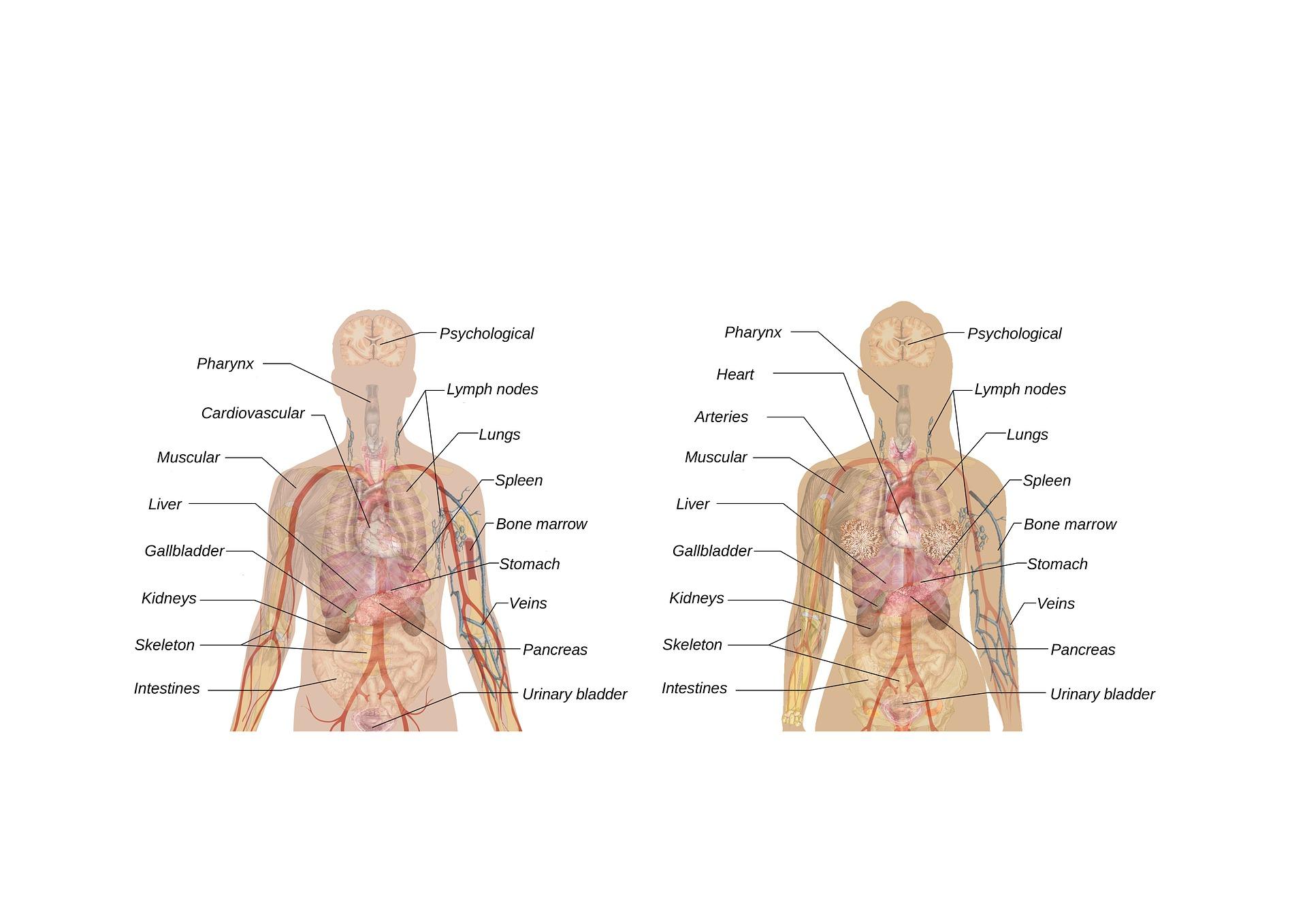 Nebennierenschwäche Erkennen Und Behandeln